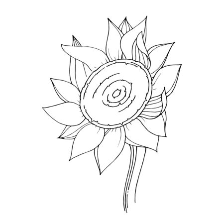 Vector Sunflower floral botanical flower. Black and white engraved ink art. Isolated sunflowers illustration element. Illusztráció