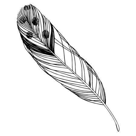 Vektor Vogelfeder vom Flügel isoliert. Schwarz-weiß gravierte Tinte Art.-Nr. Isolierte Federn Illustrationselement.