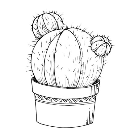 Vector Cacti floral botanical flowers. Black and white engraved ink art. Isolated cactus illustration element. 版權商用圖片 - 135039174