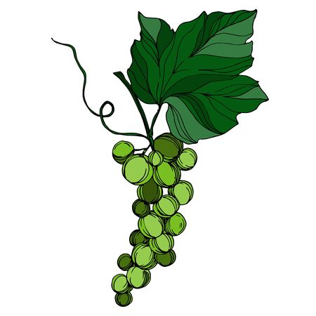 Vector Grape berry healthy food. Black and white engraved ink art. Isolated grape illustration element. Ilustracja