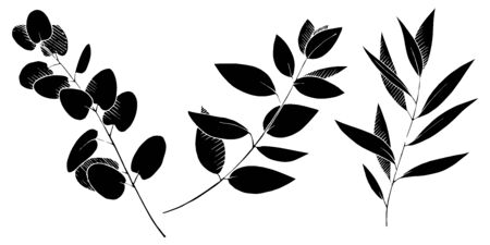 Vector Eucalyptus leaves branch. Black and white engraved ink art. Isolated branches illustration element. Vetores