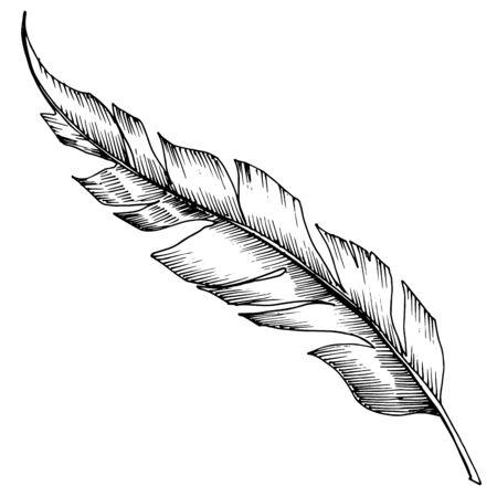 Plume d'oiseau de vecteur d'aile isolée. Art d'encre gravé en noir et blanc. Élément d'illustration de plumes isolées. Vecteurs