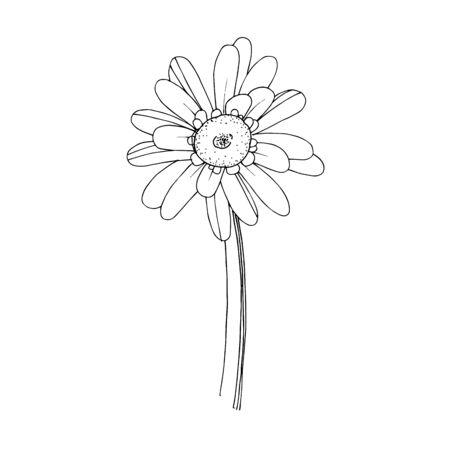 Vector gerbera floral botanical flower. Black and white engraved ink art. Isolated gerbera illustration element.
