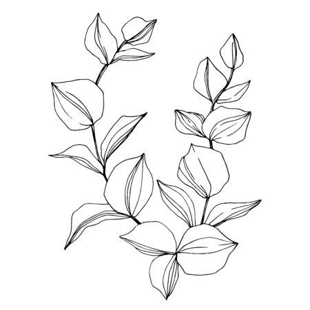 Branche d'Eucalyptus de vecteur. Art d'encre gravé en noir et blanc. Élément d'illustration d'eucaliptus isolé. Vecteurs