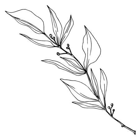 Vector Eucalyptus branch. Black and white engraved ink art. Isolated eucaliptus illustration element. Vecteurs