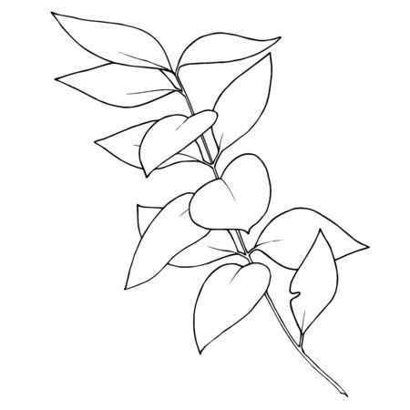 Vector Eucalyptus branch. Black and white engraved ink art. Isolated eucaliptus illustration element.