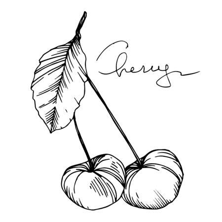Alimento sano della ciliegia di vettore. Inchiostro inciso in bianco e nero art. Elemento di illustrazione bacca isolato.