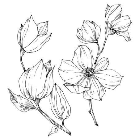 Vektor botanische Blumen der Magnolie. Schwarz-weiß gravierte Tinte Art.-Nr. Isoliertes Magnolien-Illustrationselement.