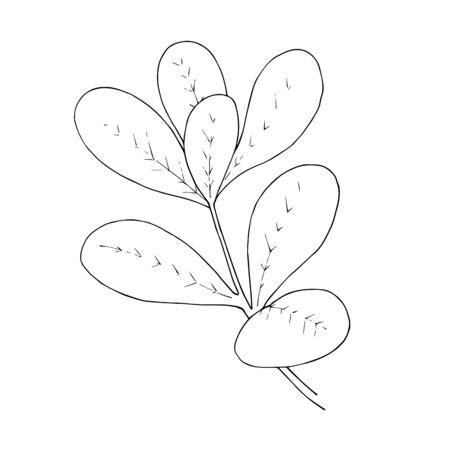 Vector Herbal floral foliage. Black and white engraved ink art. Isolated herbal illustration element.