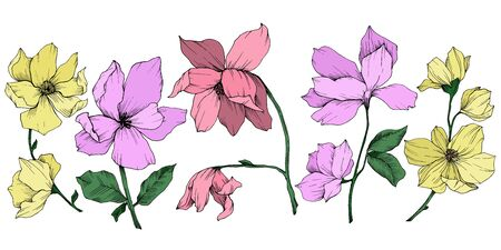 Vector Magnolia floral botanical flowers. Black and white engraved ink art. Isolated magnolia illustration element. Stock fotó - 134269113