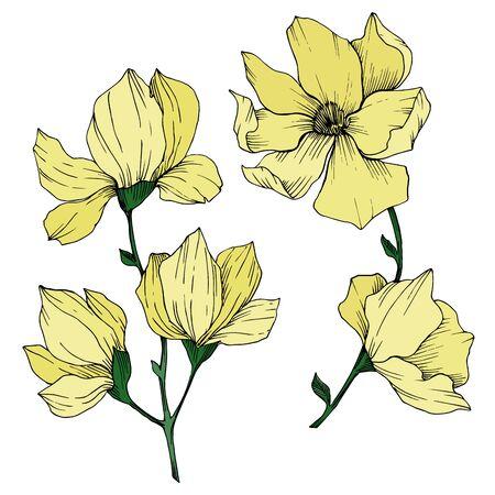 Vector Magnolia floral botanical flowers. Black and white engraved ink art. Isolated magnolia illustration element. Stock fotó - 134269135