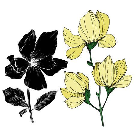 Vector Magnolia floral botanical flowers. Black and white engraved ink art. Isolated magnolia illustration element. Stock fotó - 134269138