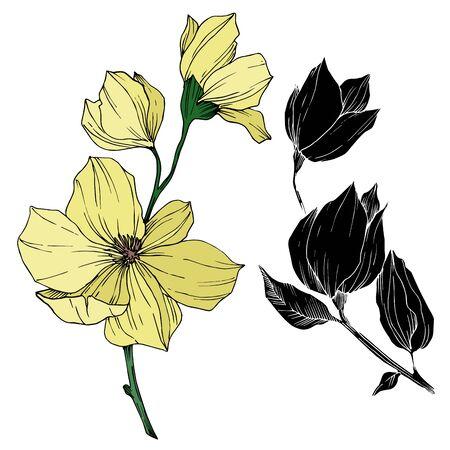 Vector Magnolia floral botanical flowers. Black and white engraved ink art. Isolated magnolia illustration element. Stock fotó - 134269139
