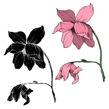 Vector Magnolia floral botanical flowers. Black and white engraved ink art. Isolated magnolia illustration element. Illusztráció
