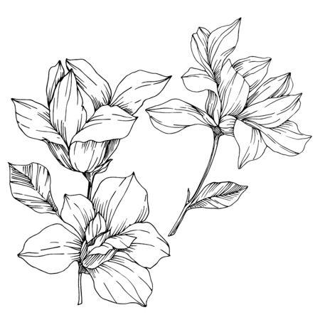 Vektor botanische Blumen der Magnolie. Schwarz-weiß gravierte Tinte Art.-Nr. Isoliertes Magnolien-Illustrationselement. Vektorgrafik