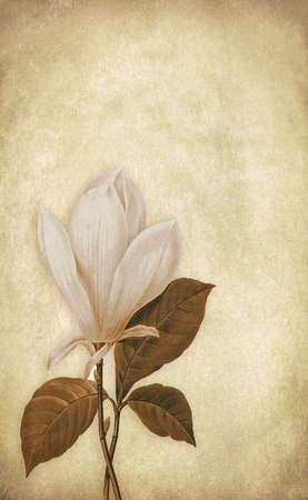 sepia: vintage paper with magnolia