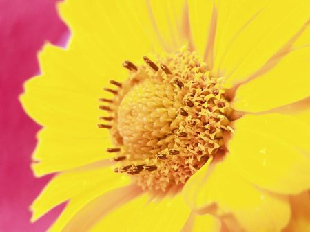 stamens: A yellow flower with stamens