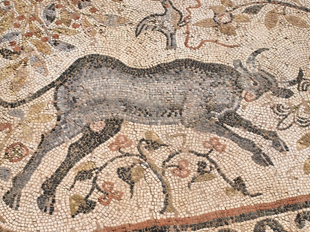 A Byzantine mosaic depicting a bull on the floor of the Great Basilica in the ancient city of Heraclea Lyncestis near Bitola, Macedonia Stock Photo - 12444626