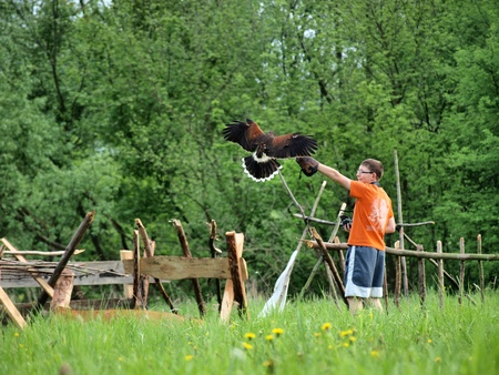 falconidae: Falconer with the bird at the historical reenactment show, Zawieprzyce, Poland, May 6th 2012.