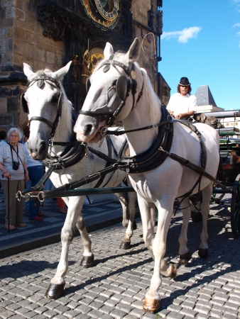 ceska: Carriage at the old town market square, Prague, Czech Republic Editorial