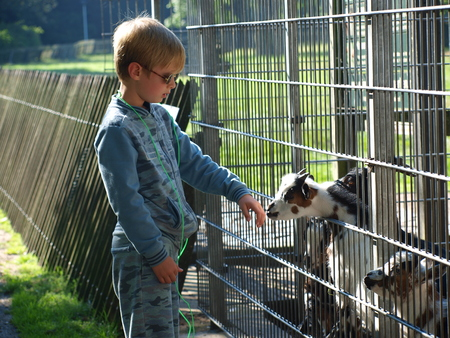 hand rails: Boy stroking the goats at the zoo, Helmond, Netherlands
