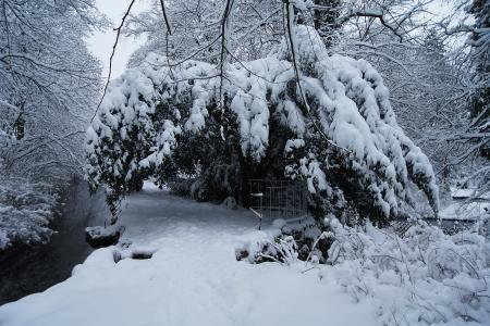Winter Park mit Fluss Lizenzfreie Bilder