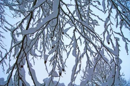 Foto, jpg, abstrakte Winter Baum