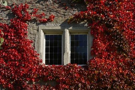 alten, �berwachsenen Fenster im Herbst