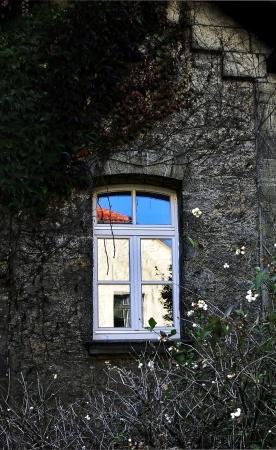 alten, �berwachsenen Fenster im Herbst mit Reflexion