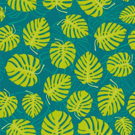 monstera leaf: monstera leafs, floral background  vector illustration  Stock Photo