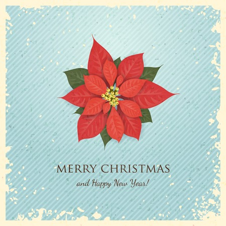greeting christmas: Christmas Greeting Card with Poinsettia.