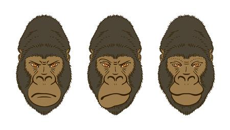 mimic: Gorillas Mimic, Three Portraits Isolated on White.