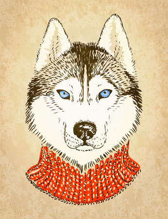 935 Siberian Husky Stock Vector Illustration And Royalty Free ...