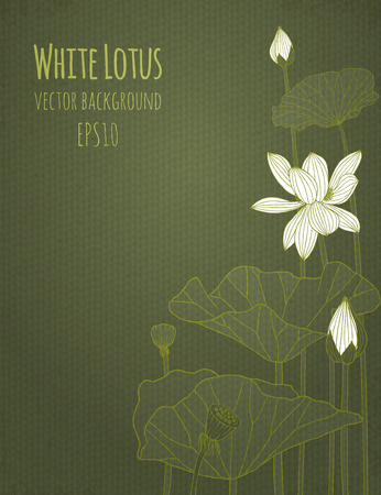 leaf line: Background with flowers of white lotus. Vector illustration, eps10.