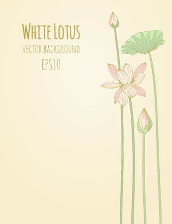 lotus leaf: Background with flowers of white lotus. Vector illustration, eps10.