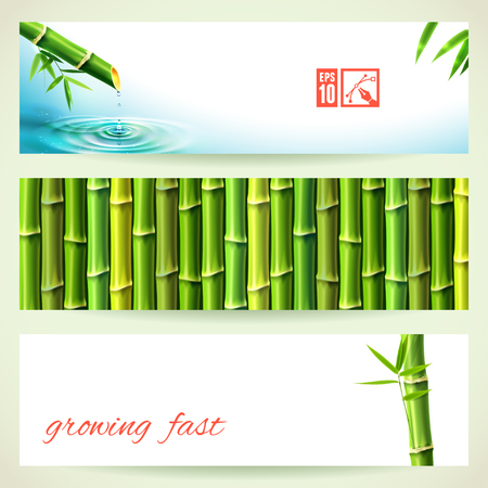 bambu: Conjunto de banners horizontales de bambú. Ilustración del vector, eps10, editable. Vectores