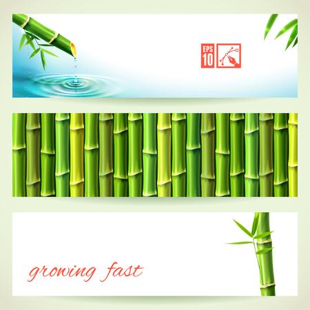 bambou: Ensemble de Bambou Horizontal Bannières. Vector illustration, eps10, modifiable.