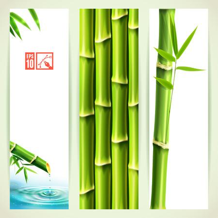 japones bambu: Conjunto de banners verticales de bambú. Ilustración del vector, eps10, editable.