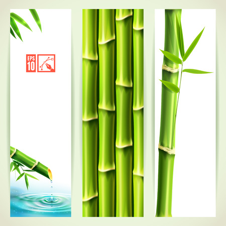 bamboo leaves: Set of Vertical Bamboo Banners. Vector illustration, eps10, editable.
