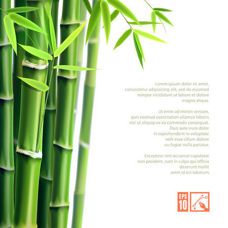 Background with bamboo. Vector illustration, eps10, editable. Çizim
