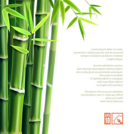 japones bambu: Fondo con el bambú. Ilustración del vector, eps10, editable. Vectores