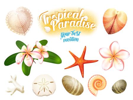 almeja: Conjunto de objetos de la naturaleza tropical: conchas de mar, plumeria flores (frangipani) erizo de mar, estrellas de mar y guijarros desgastados por el agua. Aislado en blanco ilustración vectorial, eps10.