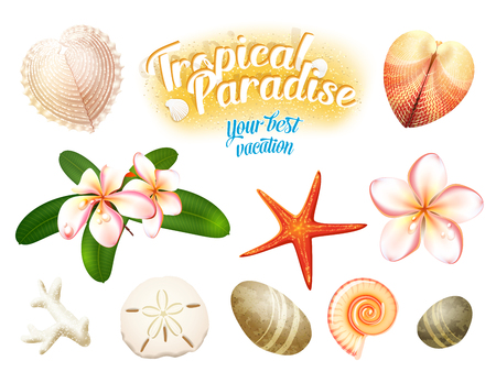 dollaro: Insieme di oggetti tropicali naturali: conchiglie, fiori Plumeria (Frangipani) dollaro di sabbia, stelle marine e ciottoli erosi dall'acqua. Isolato su bianco illustrazione vettoriale, eps10.