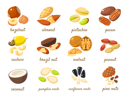 seeds: Cartoon nuts set - hazelnut, almond, pistachio, pecan, cashew, brazil nut, walnut, peanut, coconut, pumpkin seeds, sunflower seeds and pine nuts. Vector illustration, eps 10.