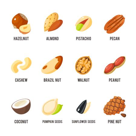 Cartoon noten set - hazelnoot, amandel, pistache, pecannoten, cashewnoten, paranoten, walnoten, pinda, kokosnoot, pompoenpitten, zonnebloempitten en pijnboompitten. Vector illustratie, eps 10.