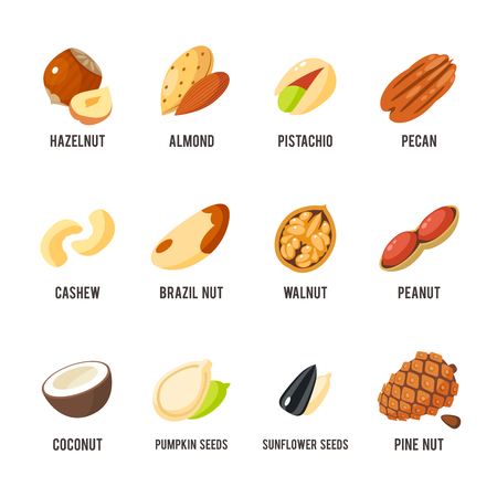 sunflower seed: Cartoon nuts set - hazelnut, almond, pistachio, pecan, cashew, brazil nut, walnut, peanut, coconut, pumpkin seeds, sunflower seeds and pine nuts. Vector illustration, eps 10.