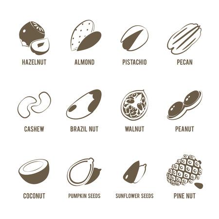 pecan: Set of monochrome, lineart food icons: nuts - hazelnut, almond, pistachio, pecan, cashew, brazil nut, walnut, peanut, coconut, pumpkin seeds, sunflower seeds and pine nuts. Illustration