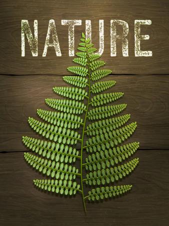 helechos: Hoja verde del helecho en el fondo de madera. Ilustración vectorial realista.