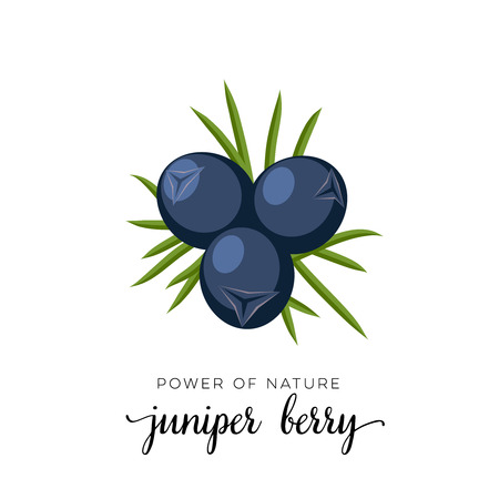 Blue juniper berry flat icon with inscription colorful vector illustration isolated on white. Illustration