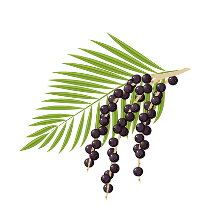 アサイの果実と葉を持つ分岐します。ベクトル フラット アイコン イラストは、白で隔離。